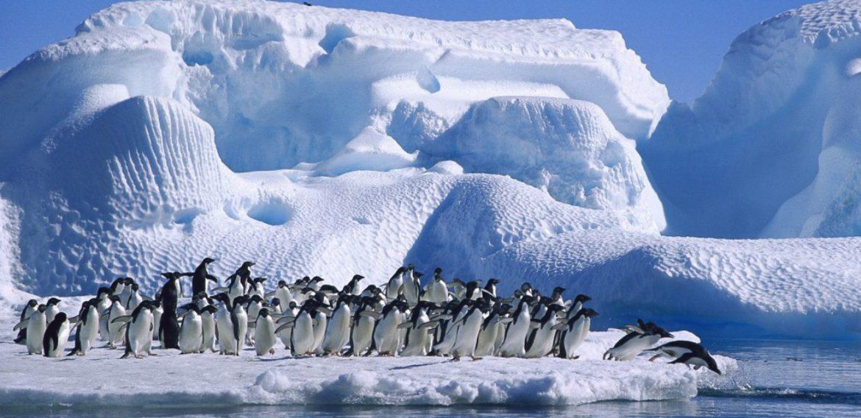 Promoção 2º passageiro Free pela Antártida!